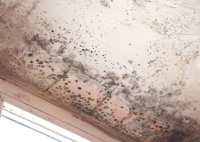 Mold Growing on Painted Ceiling